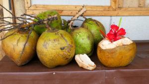 Kokosnüsse zum Trinken vorbereitet